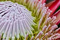 Royal Botanic Garden Melb Vol 01 (53791160).jpeg