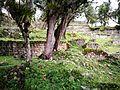 Ruïnes de Kuelap entre la vegetació02.jpg
