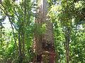 Ruinas de la Hacienda Belvedere, Cabo Rojo, Puerto Rico.jpg