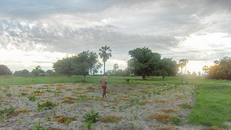 Ovambo people - Grasslands in rural Ovamboland.