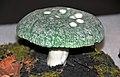 Russula virescens (green russula mushroom) 2.jpg