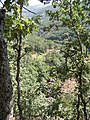Ruta hacia la Garganta del infierno (Valle del Jerte) 2.JPG