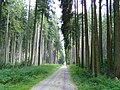 Sachsenrieder Forst 2.jpg