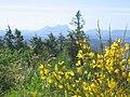 Saddle Mountain -11 (688756215).jpg