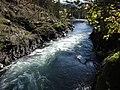 Salmon run at Adams River 2010 (5074056889).jpg