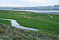 Saltmarsh in Taw Estuary.jpg