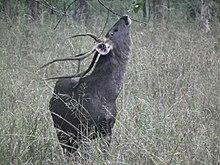 POC Sika deer - 2CoolFishing