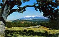 San Francisco Peaks, Bob Fronske photo (NBY 432937).jpg