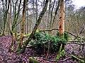 Sandweiler, réserve naturelle Birelergronn (103).jpg