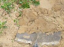 Sandy loam.JPG