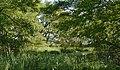 Schleswig-Holstein, Neuendorf, Naturdenkmal NIK 6248-B.jpg