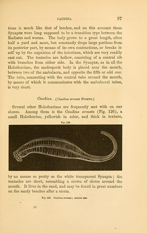 Seaside studies in natural history (Page 97) BHL11583285