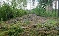 Selkäkangas cairn Nakkila Finland IMG 6553 57.jpg