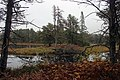 Seney National Wildlife Refuge (15457899291).jpg