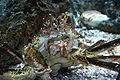Shedd Crab.JPG