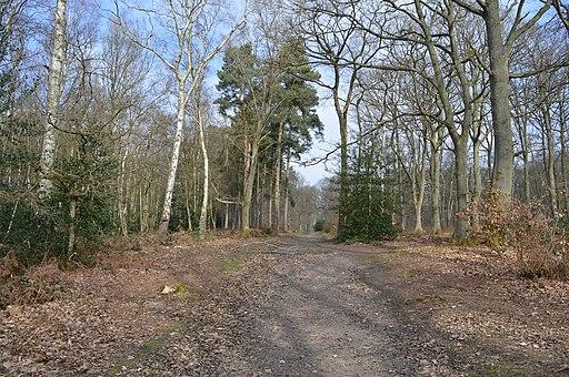 Sherrardspark Wood 6