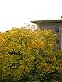 Shugakukan Hall, Kinugasa Campus (Ritsumeikan University, Kyoto, Japan).JPG