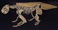 Simosuchus clarki, ROM.jpg