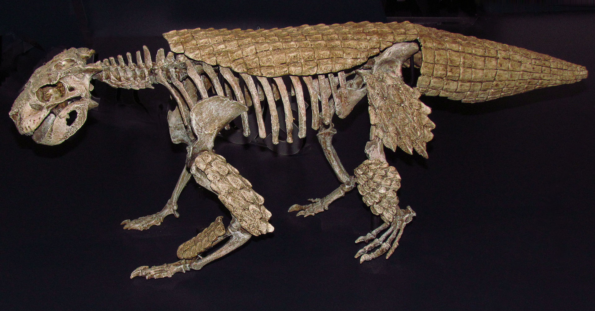 http://upload.wikimedia.org/wikipedia/commons/thumb/a/a1/Simosuchus_clarki%2C_ROM.jpg/1920px-Simosuchus_clarki%2C_ROM.jpg