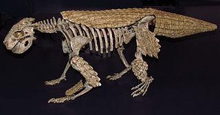 <i>Simosuchus</i> genus of crocodylomorphs