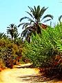 Siwa Oasis, Qesm Siwah, Matrouh Governorate, Egypt - panoramio (16).jpg
