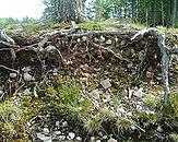 Skorbrant, Stromsund, 15 juni 2005