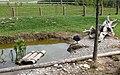 Slovenske Konjice (Mini Zoo Land) - ptiči 6.jpg