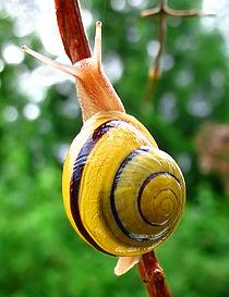 Snail-WA edit02.jpg