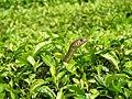 Snake 6.jpg