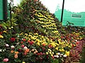 Snap from Lalbagh Flower Show Aug 2013 7889.JPG