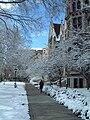 Snowy UChicago.jpg