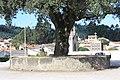Sobreiro do Largo da Igreja - Parada de Todeia, Paredes - 09.jpg