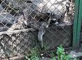 Sofia Zoo E98.jpg