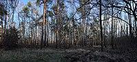 Sollnitz, natural monument Vordere Moch-Hau.jpg