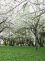 Spring 2008 - Cluj-Napoca (2408345058).jpg