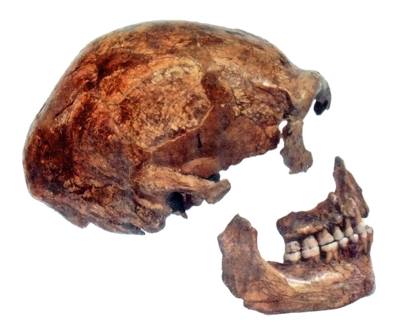 Spy Skull.jpg