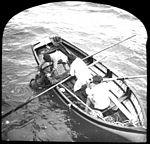 Squale noir dans un filet Havenau, explorations du Prince de Monaco, 1905 (5640056105).jpg