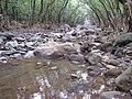 Starr-130311-2080-Syzygium cumini-habitat with gulch after flood-Maliko Gulch-Maui (24579846033).jpg