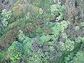 Starr-141014-5107-Caesalpinia decapetala-aerial view Hana Hwy-Kakipi Gulch Haiku-Maui (25129179652).jpg