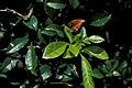 Starr 980601-1505 Unknown sp..jpg