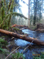 Steelhead recovery in the Sandy River Basin (27011195881).png