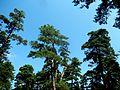 Stepanavan Dendropark 1, ArmAg (3).jpg