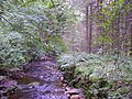 Stream and Woods in Woods near Dallow - geograph.org.uk - 506340.jpg