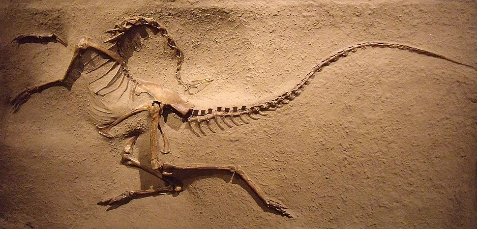Struthiomimus ROM