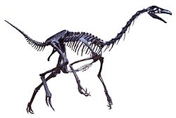 Struthiomimus white background.JPG