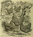 """Successful poultry keeping - a text book for the beginner and for all persons interested in better poultry and more of it-contains the """"secrets of success"""" both for pleasure and profit-new and (14803146363).jpg"""