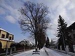 Suchdol - stromořadí lip srdčitých v Gagarinově ulici na Budovci (16).jpg