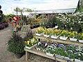 Summer and autumn bedding plants (6164471676).jpg