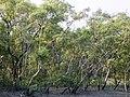 Sundarbans (3).jpg