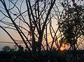 Sunset Landscape.jpg